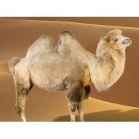 Одеяло Верблюжья шерсть (29)