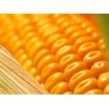 Подушки Кукуруза