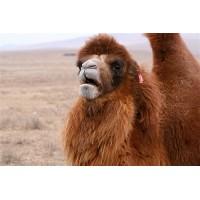 Подушки Верблюжий пух (2)